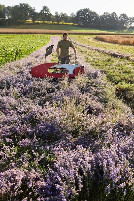 Landwirt Roland Friedli erntet seinen Lavendel in Bettenhausen