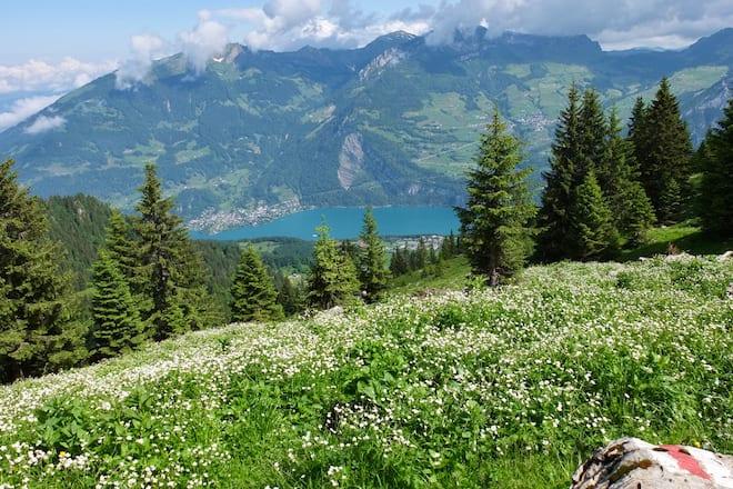 Wandern im Glarnerland, Nüenchamm über Blumenwiese, unten im Tal liegt der Walensee.