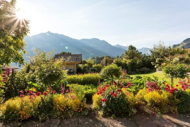 Blick in den Garten von Annemarie und Mariane Lauener in Frutigen bis zu den Berner Voralpen
